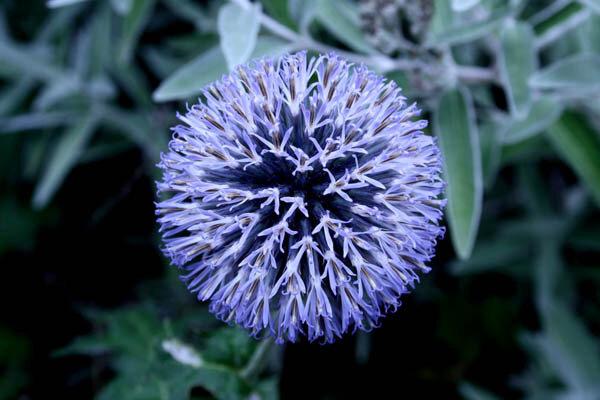 fleurs-e