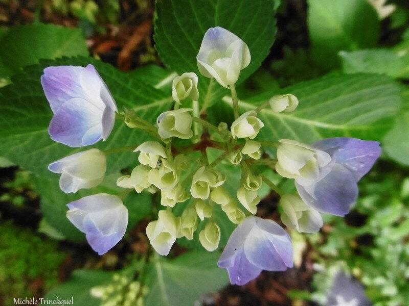 1-Mes fleurs 150619