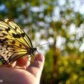 Butterfly (91)