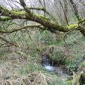 Le ruisseau à la Vialle Neuve