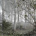 Le peuplier, un arbre riche de nombreuses légendes