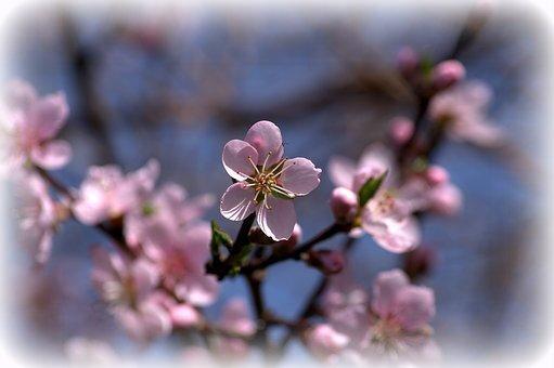 fleur arbre
