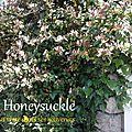 Rentrer d'un week-end ou de vacances extra et reprendre le quotidien / fleurs de bach : honeysuckle - olive, hornbeam