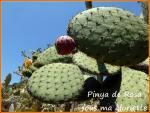 pinya49