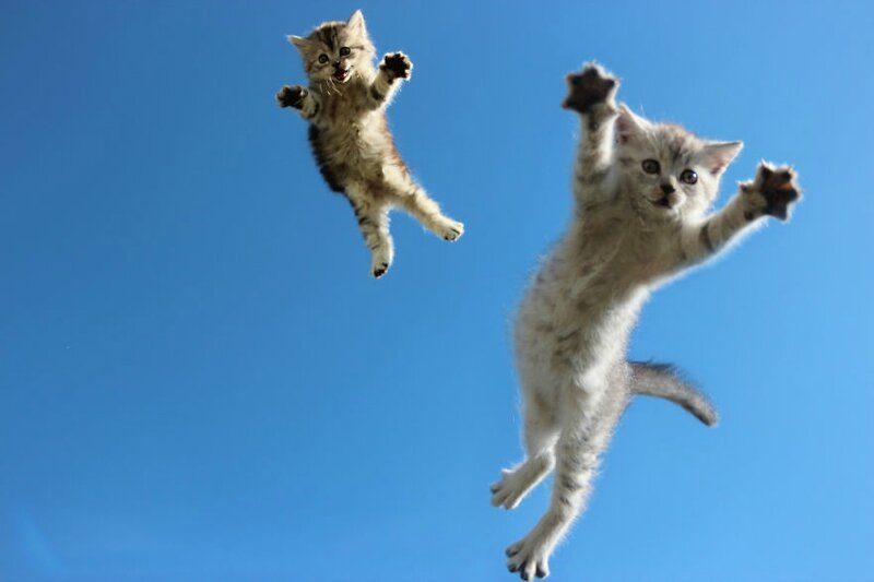 funny-jumping-cats-103__880