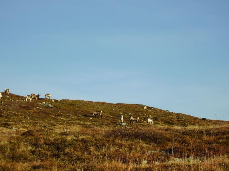 17-10-08 Sortie Montagne et rennes (031)