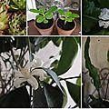 Open-Live-Writer/BONHEURS_E039/plantes_thumb