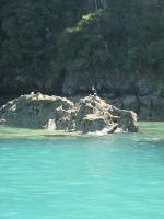 Abel Tasman National Parc (15)