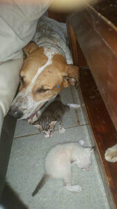 Bongo et les chatons