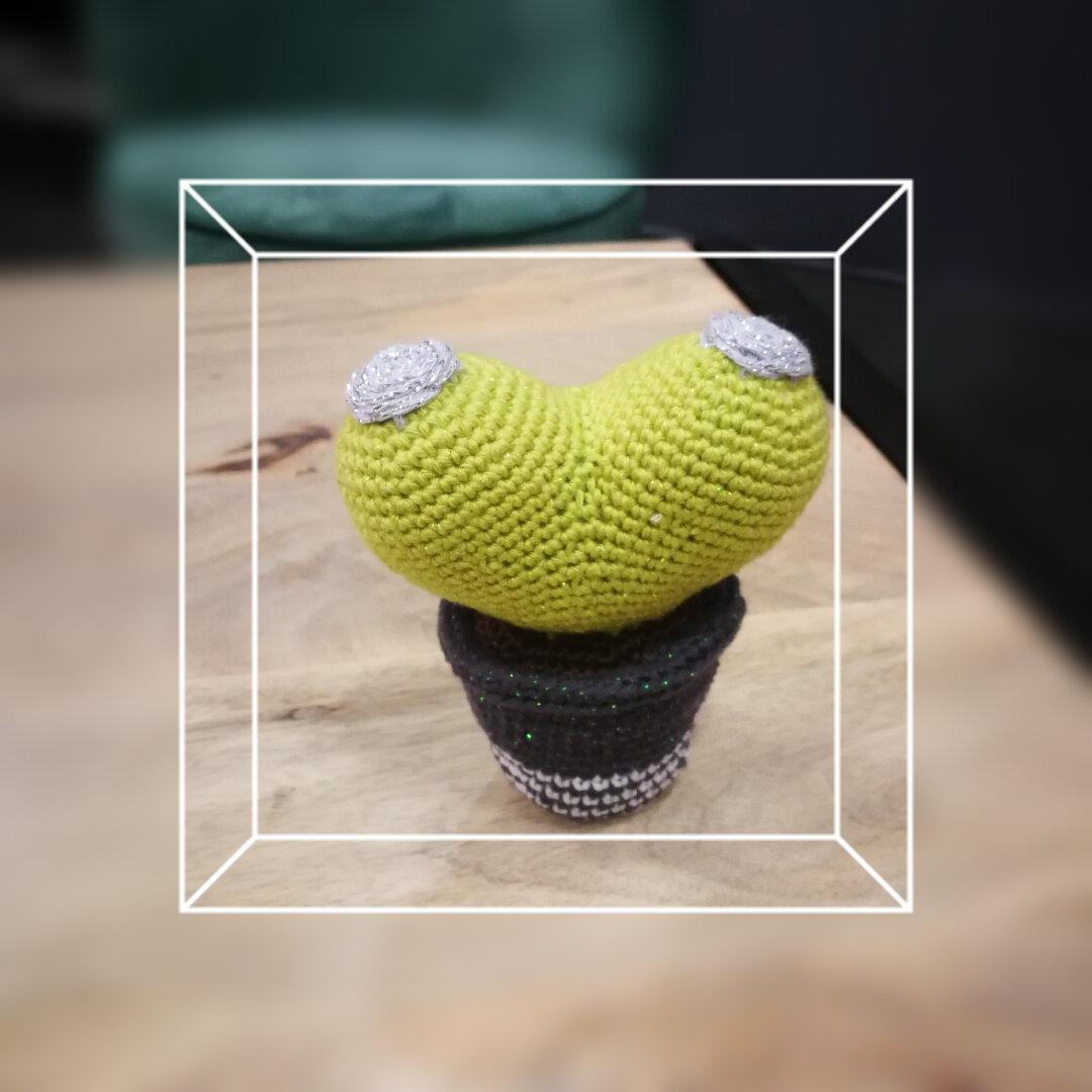 20181112 Booby cactus