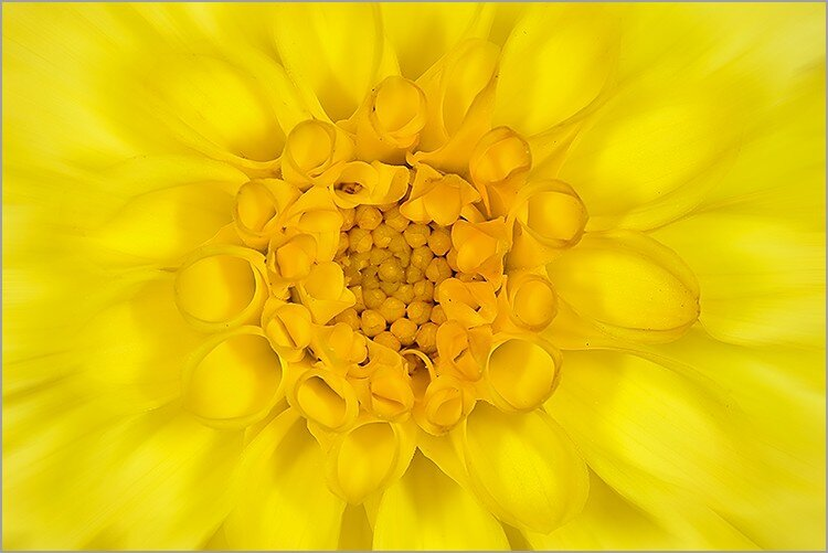 coeur_de_fleur_jaune