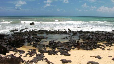 Praia Pipa 048