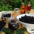 Ronce a mures rubus fruticosus