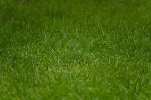 5658097-detail-de-gros-plan-de-bright-green-herbe-fraichement-coupee