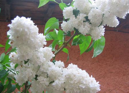 2010_05_14_ROANNE_208