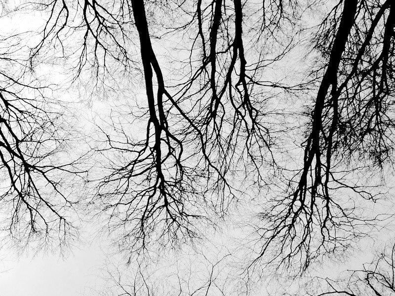 arbres-fleuve