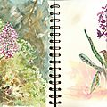 Pages 39 et 40 Orchidées à la Réunion et en Normandie