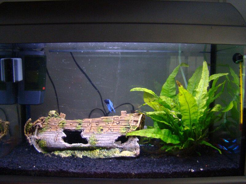 001_aquariumsushibis