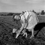 1945_meadow_sitting_sheep_by_dd_mmad128