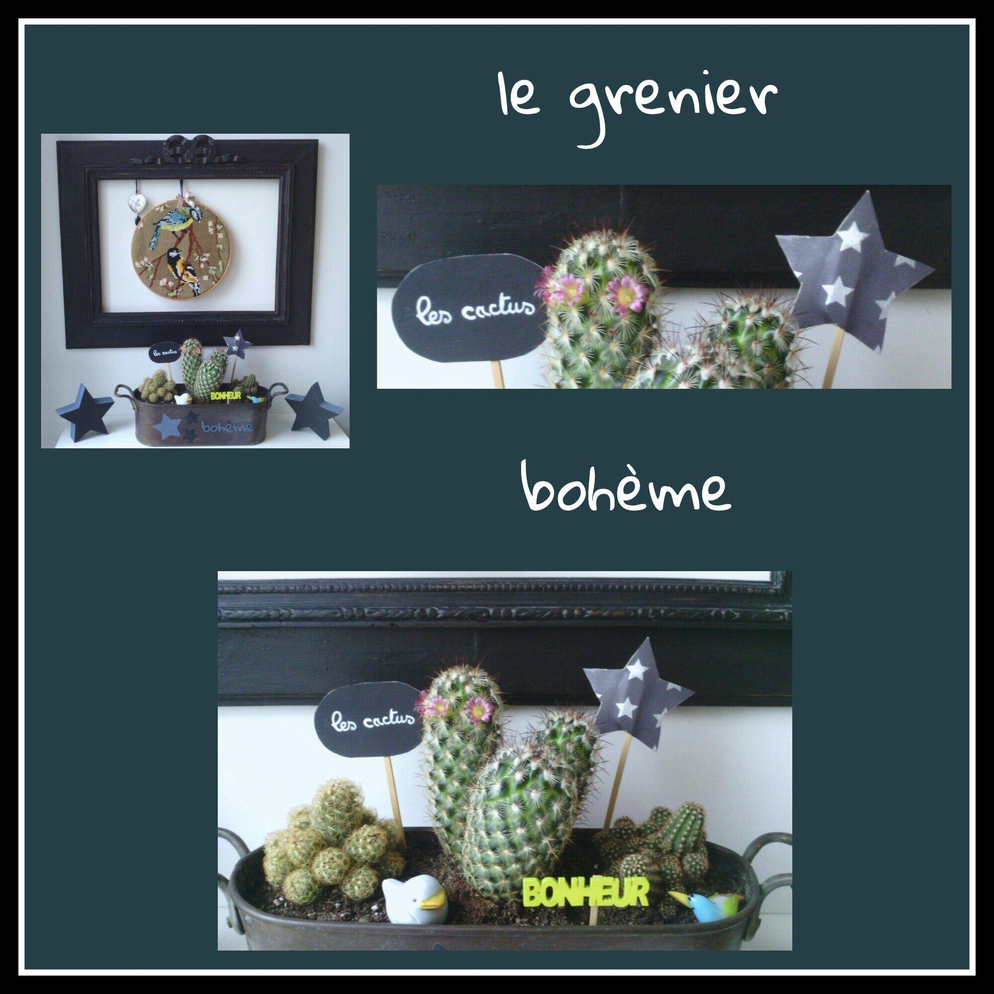 cactus bohème en fleurs
