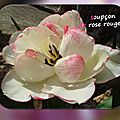 balanicole_2016_05_avril tulipes_34_soupçon de rose rouge
