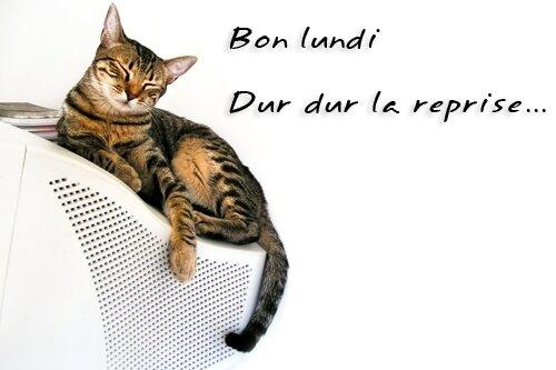 bon_lundi_joliecarte17