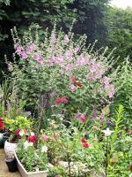 Ispahan jardin fleurs