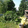 12 juin- lauriers broyés et figues séchées