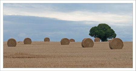 Plaine arbre balles paille 2 lievre 100711