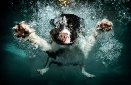 diving_dogs_photography9_550x359
