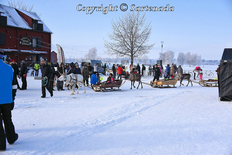 reindeer_rides_for_families_oulu_-11