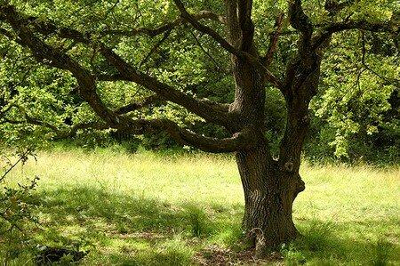 arbree