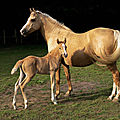 Mare_and_foal_(Kvetina-Marie)