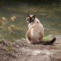 Ma gardienne de l'eau ...