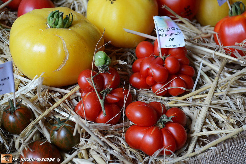 PAT_5935-Tomatophiles
