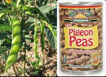 OMPO PIGEONS PEAS - GRENADE
