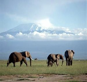 Kilimandjaro Elephants