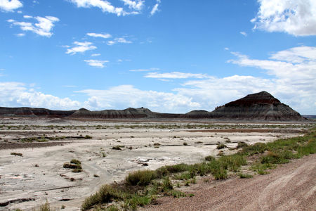 Petrified_Forest_20