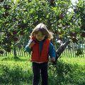 Cueillette de pommes à St Joseph sur le lac