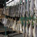 116- le poisson séché, toujours une spécialité du village