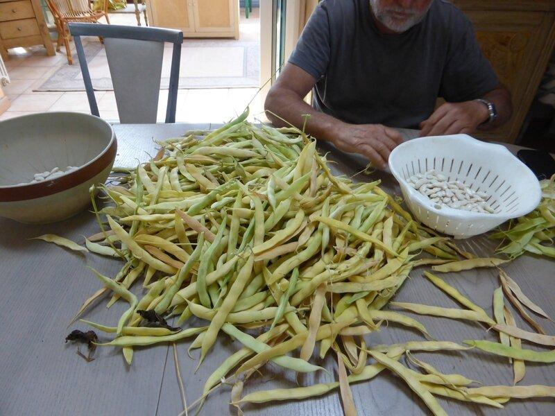20-haricots tarbais (3)