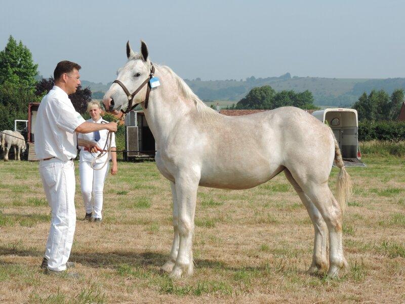 Galante de l'Equipay - 20 Juin 207 - Concours élevage local - Bonningues les Ardres (62) - 1ere (1 an)