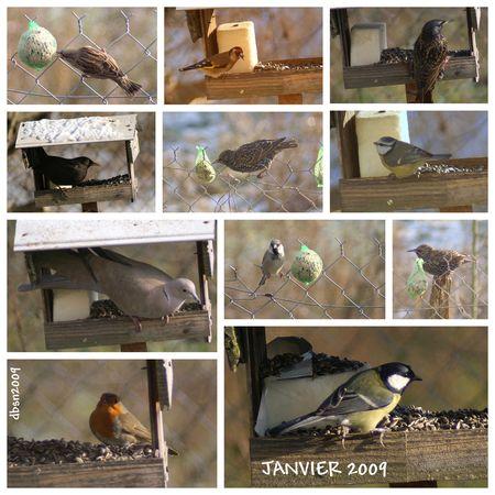 2009_01_03_Oiseaux2