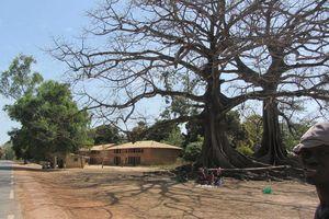 Sénégal (559)