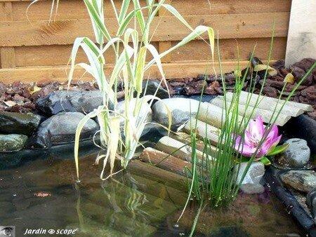 Bassin_de_jardin