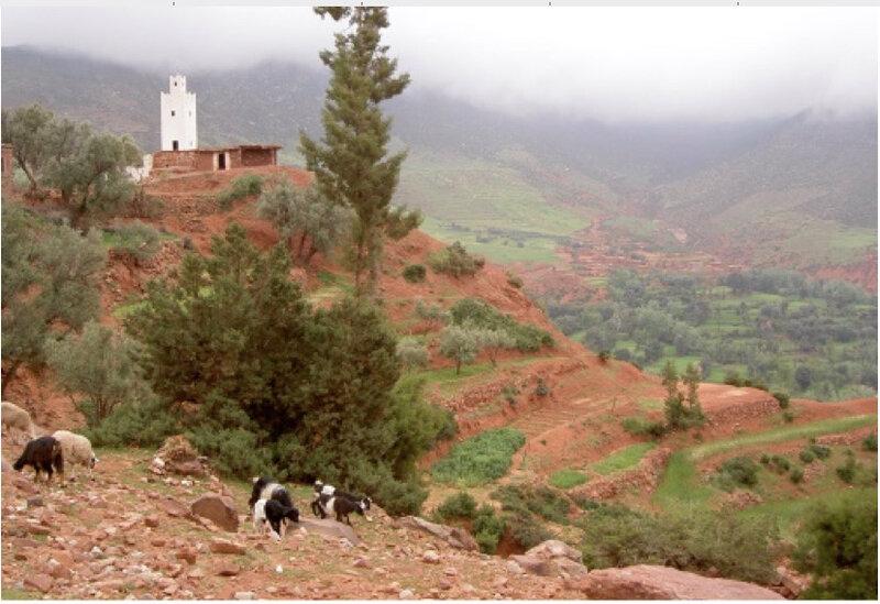 Vallée-ZAT-mosquée