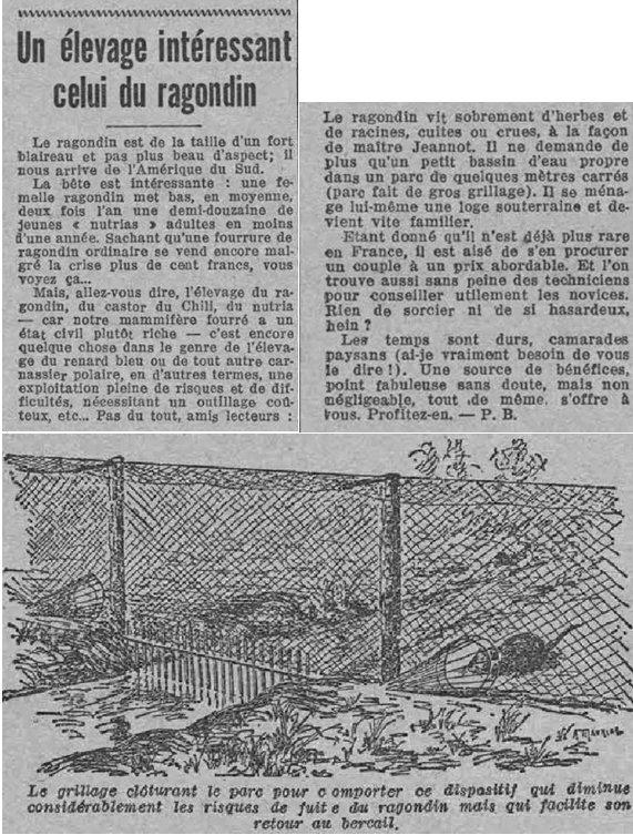 Rragondin midiSocialiste 1933