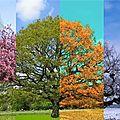 Griffonnade 138 : saisons