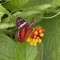 Fleur et son papillon