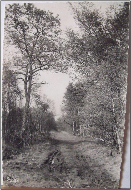 Sucy en Brie - Forêt des Bruyères